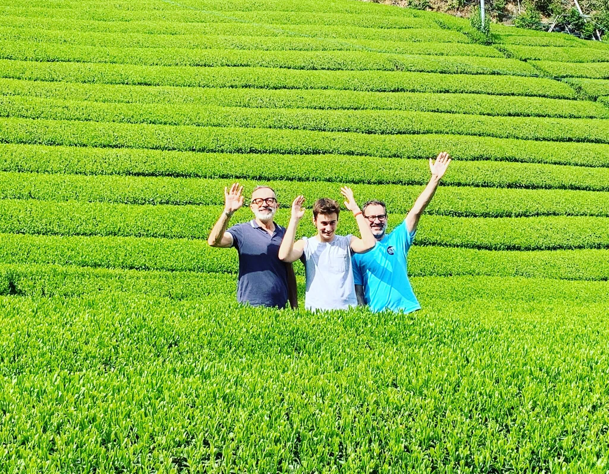 green tea farm visiting in shizuoka