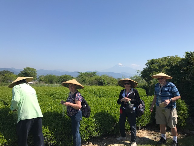 tea picking at Nihondaira Ocha Kaikan