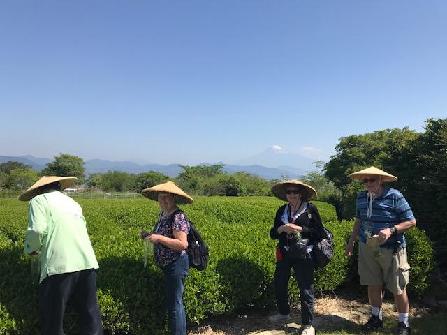 tea picking at Nihondaira Ocha Kaikan