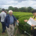Green tea farm at Nihondaira Plateau