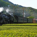 Oigawa railway steam locomotive