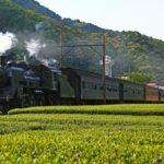 Oigawa railway steam locomotive