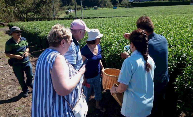 yamataka sakurai tea farm