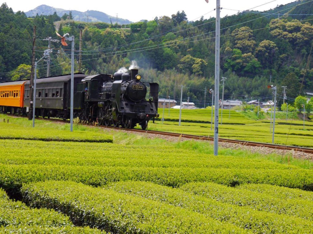 steam locomotive of oigawa railway