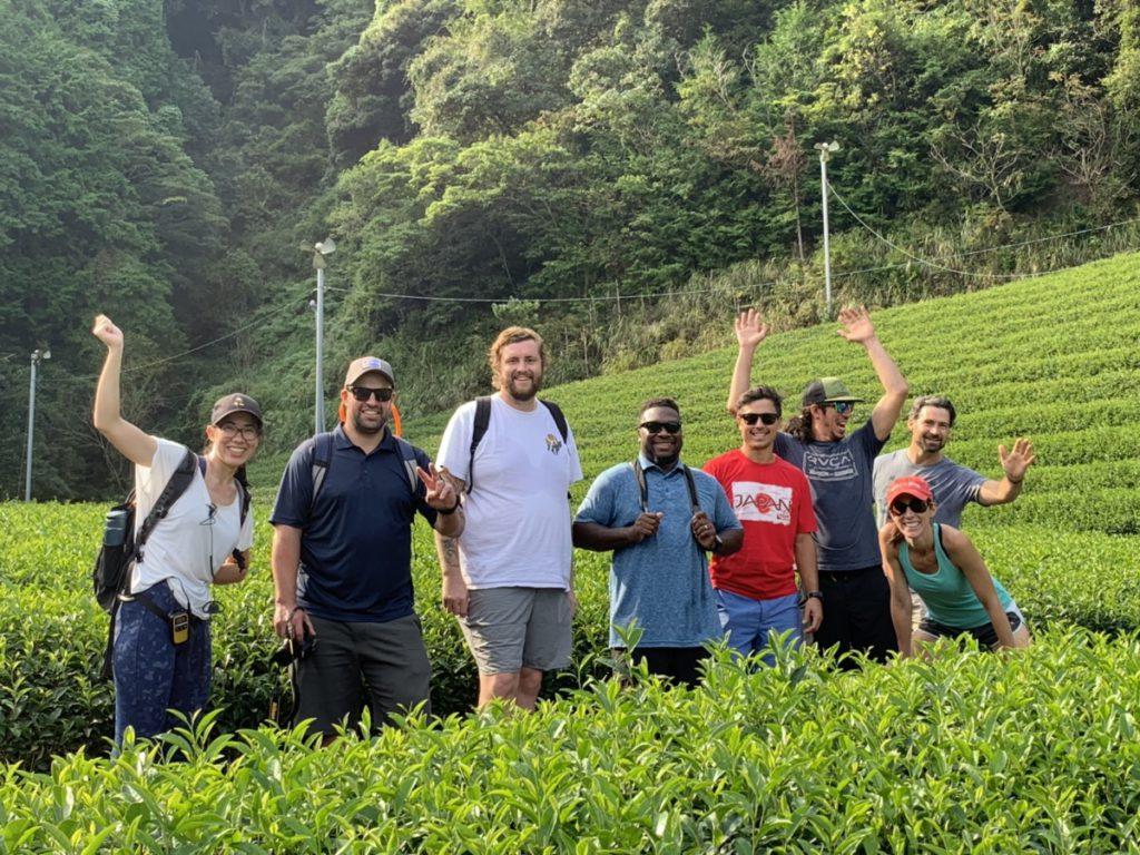 green tea farm in shizuoka
